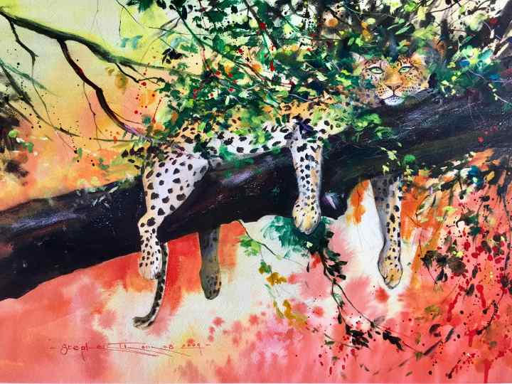 "Stephen Thomas painting of a leopard hanging out on a tree, calling the painting ""Lazy Leopard"" using watercolour and ink. Painting dimensions are 74.5cm x 55cm."