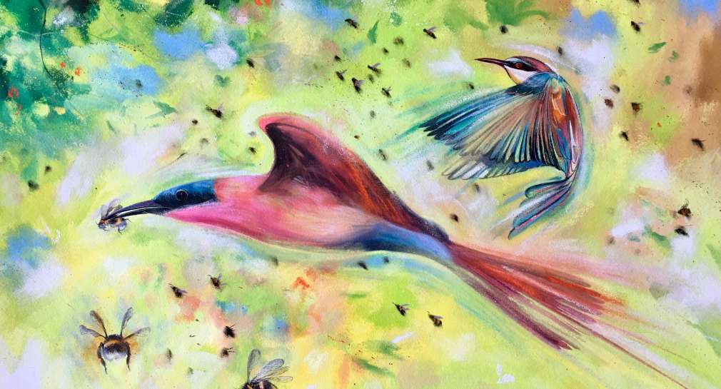 Stephen Thomas painting of Bee-Eaters on the Wing. He used mixed media of watercolours, inks and pastels. Painting dimensions are 72cm x 50.5cm.